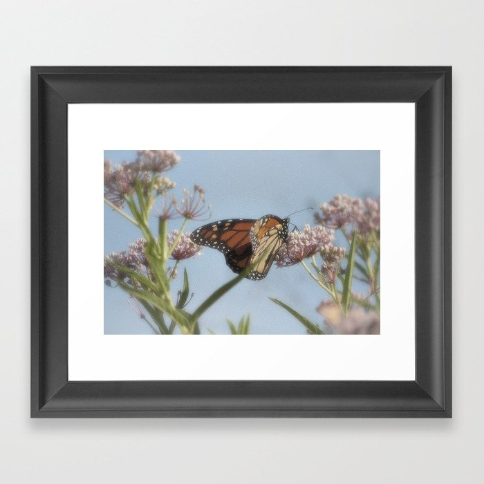 Monarch Butterfly XVII Framed Art Print