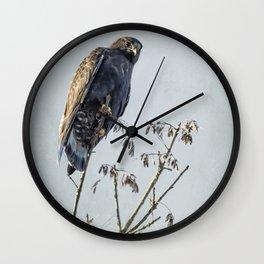 Red-Tailed Hawk, Rufous Morph Wall Clock