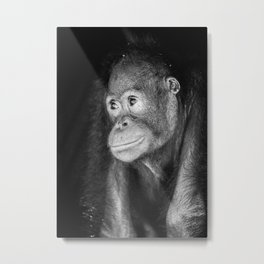 The black&white Orangutan Metal Print