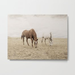 Open Country Horse Photograph Metal Print