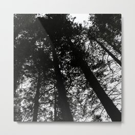 Black & White Forest Metal Print