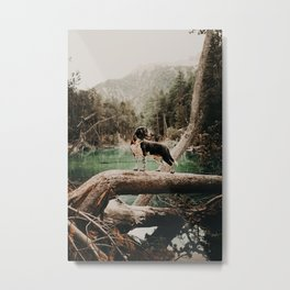 /// wild Max at the Lac Verde /// Valle Etroite Metal Print