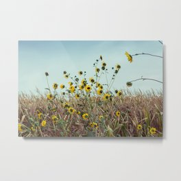 Black-eyed Susans Blowing in the Wind in the Midwest Metal Print