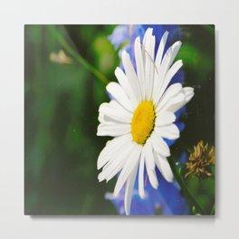 White Daisy Flower Loves Me Loves Me Not Metal Print