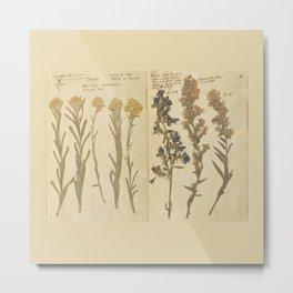 Vintage Herbarium  Metal Print
