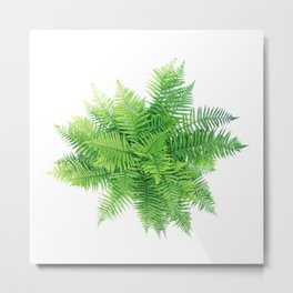 Beautiful Fern bouquet Metal Print