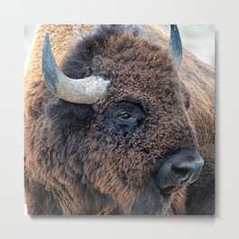 Buffalo the Mighty Beast - In The Presence Of Bison by OLena Art Metal Print