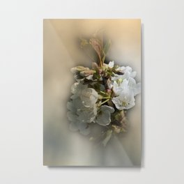 apple blossoms in spring -3- Metal Print