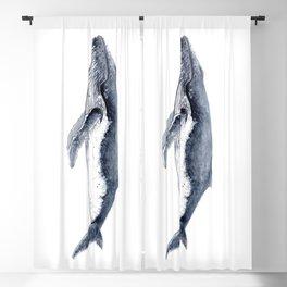 Humpback whale (Megaptera novaeangliae) Blackout Curtain