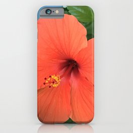 Red Hibiscus Flower Framed By Blue Wooden Wall iPhone Case