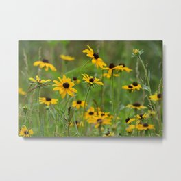 Black Eyed Susans Wildflower Field Landscape Metal Print