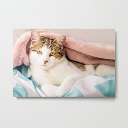 Hail King Cat! Metal Print