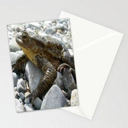 Bufo Bufo Toad Lounging On Stones Stationery Cards