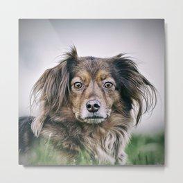 Lion dog Metal Print