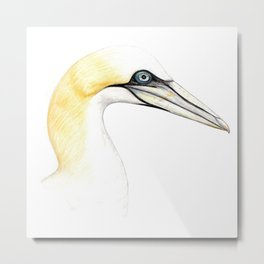 Northern gannet Metal Print