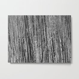 Toothpicks Metal Print