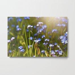 Forget me not flowers in sunlight Metal Print