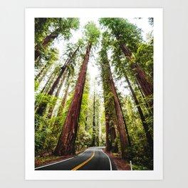 humboldt redwood forest Art Print