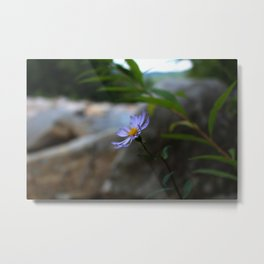 Out of Focus Metal Print