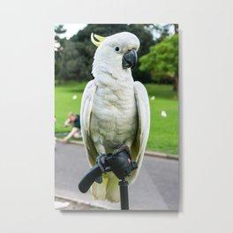 Friendly Cockatoo Metal Print
