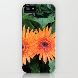 A Pair of Orange Gerber Daisies iPhone Case