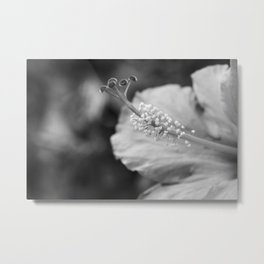 Hybiscus in Black and White Metal Print