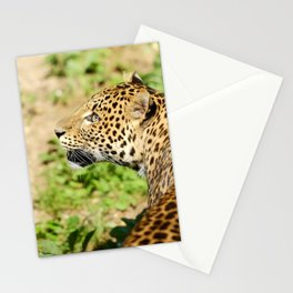The Leopard Stare Stationery Cards
