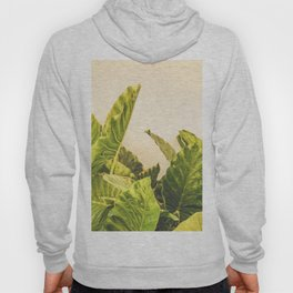 Seville XXX [ Andalusia, Spain ] Another Greenery on Yellow Wall⎪Colorful travel photography Poster Hoody