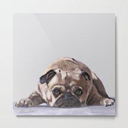 Pug at Rest Metal Print