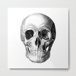Grinning Skull Anatomical Illustration Metal Print