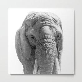 Elephant Portrait Photography B&W Metal Print