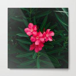 Florida Blooms II Metal Print