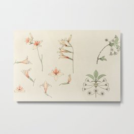 Julie de Graag - Study sheet with gladiolus and apple blossom Metal Print