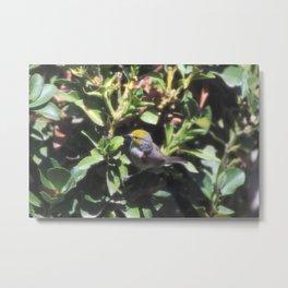 Small Verdin 3 Metal Print