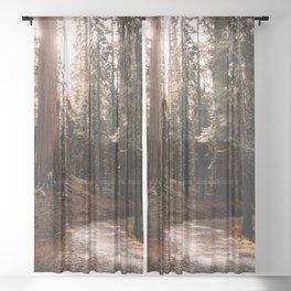 Walking Sequoia 4 Sheer Curtain
