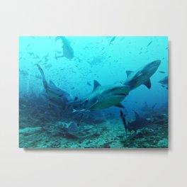 magnificent bull sharks Metal Print