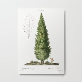 English oak, Quercus fastigiata from Traité des Arbres et Arbustes que l'on cultive en France en ple Metal Print