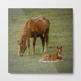 Horse And Foal Metal Print