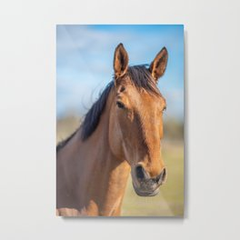Brown horse looking into the camera Metal Print