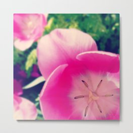 Timid Tulipa Metal Print