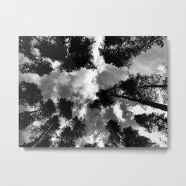 Pine Trees, Horner Wood, Exmoor. Metal Print