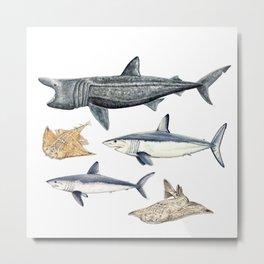 Shark diversity Metal Print