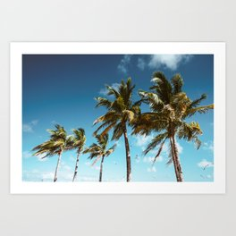 palm tree in miami Art Print