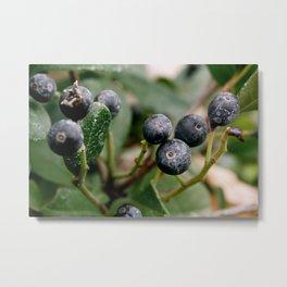 Botanical close up. Metal Print