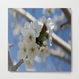 Beautiful Delicate Cherry Blossom Flowers Metal Print