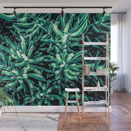 green succulent plant texture background Wall Mural