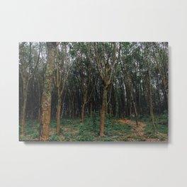 Rubber Plantation , Thailand 002 Metal Print