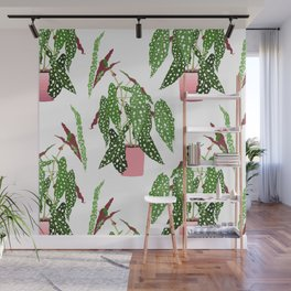 Simple Potted Polka Dot Begonia Plants in White Wall Mural
