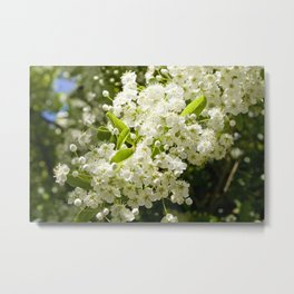 Summer White blossom Metal Print