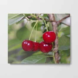 Cherries, fresh on the tree Metal Print